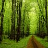 Τη «φωνή των δέντρων» κατάφεραν να καταγράψουν για πρώτη φορά οι επιστήμονες